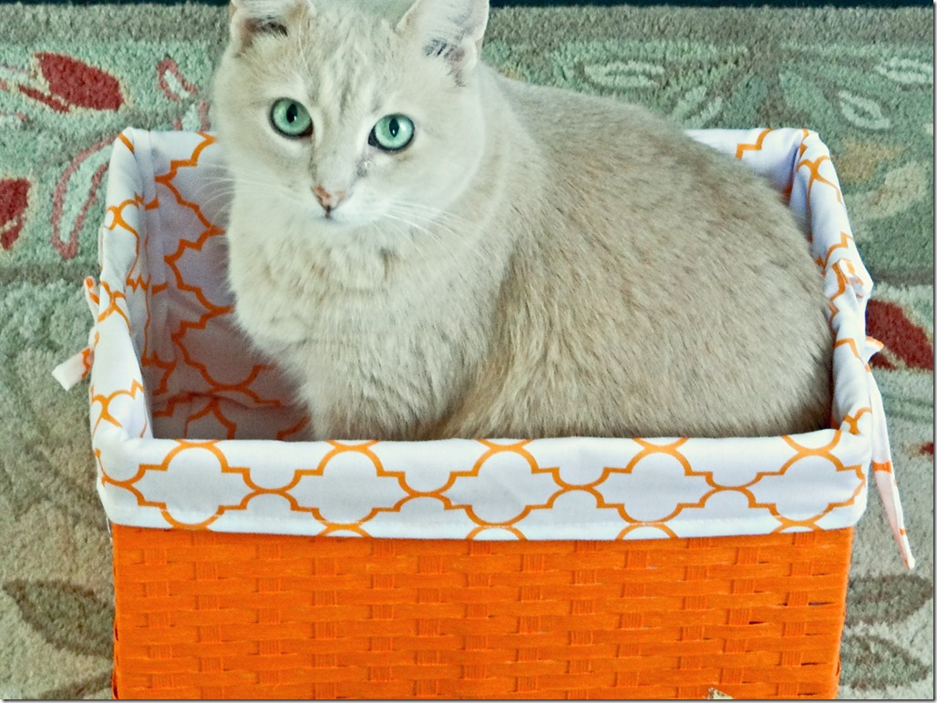 Simon in Basket